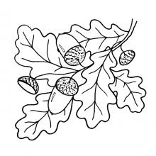 Рисунок карандашом дубовый лист (17 фото)