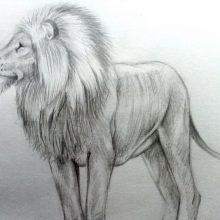 Рисунки для срисовки знаки зодиака лев (15 фото)