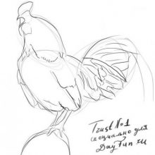 Рисунки петуха карандашом для срисовки (40 фото)