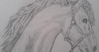 Рисунки карандашом голова лошади (32 фото)