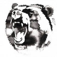 Рисунки карандашом голова медведя (23 фото)