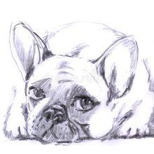 Рисунки карандашом французский бульдог (60 фото)