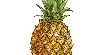 Рисунки ананас карандашом для скетчбука (19 фото)
