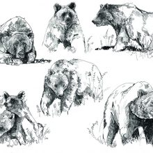 Рисунки карандашом бурый медведь (20 фото)