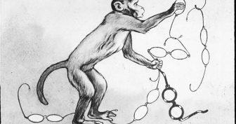 Рисунки к басне «Мартышка и очки» карандашом (18 фото)