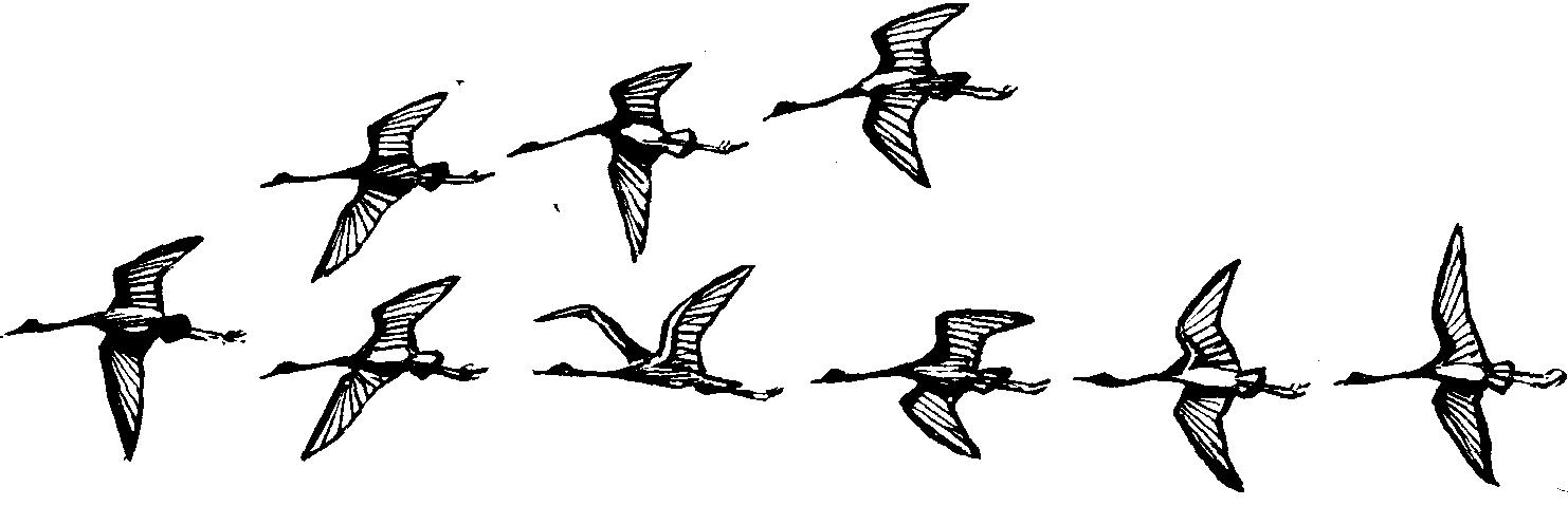 улетающие птицы рисунки квантовой