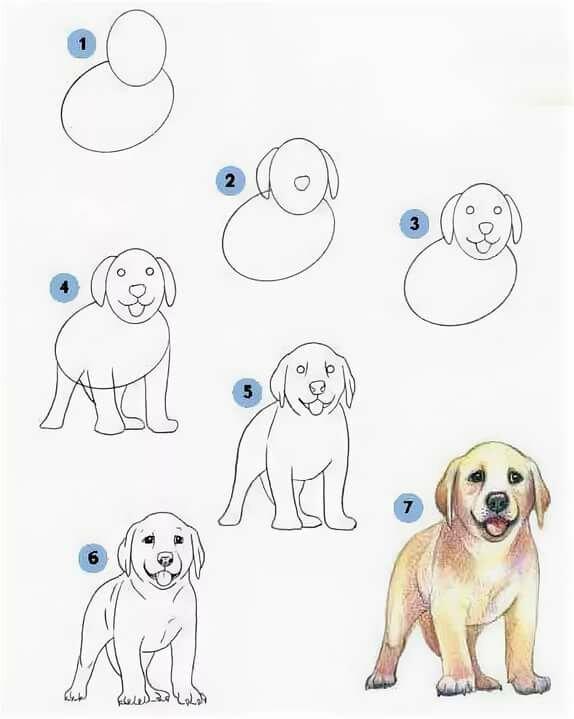 рисунки собак поэтапно для начинающих далеко всех