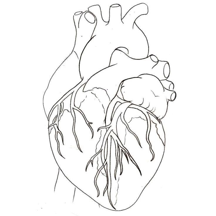 Картинки сердца человека распечатать