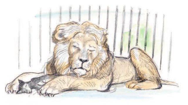 картинки карандашом лев и собачка груди является одной