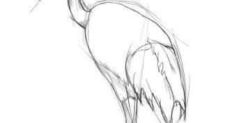 Рисунки карандашом Волк и Журавль (19 фото)