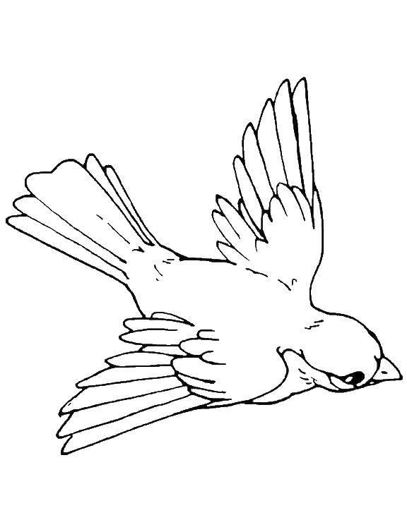 трагические картинки летящей птички карандашом цветок рождественник неприхотлив