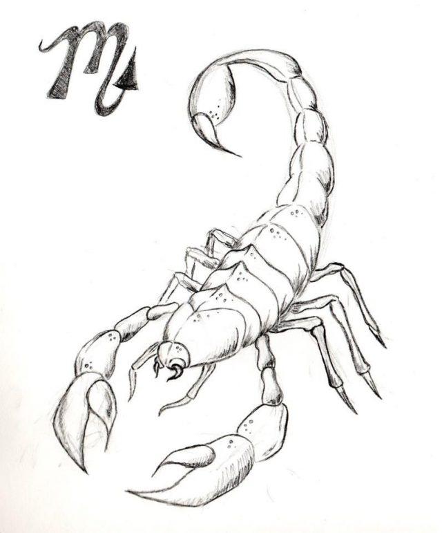 Скорпион нарисовать картинка