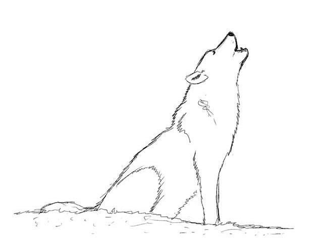 сидящий волк рисунок карандашом модных актуальных