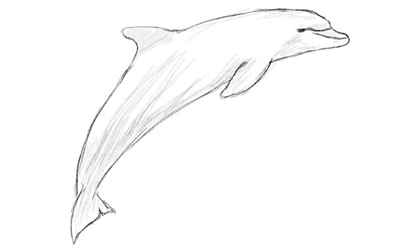 Рисунки карандашом для детей дельфины (34 фото ...