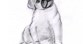 Рисунки щенка карандашом для детей (33 фото)