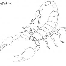 Рисунки для срисовки скорпион (40 фото)