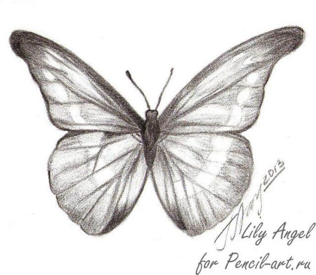 Картинки бабочка карандаш