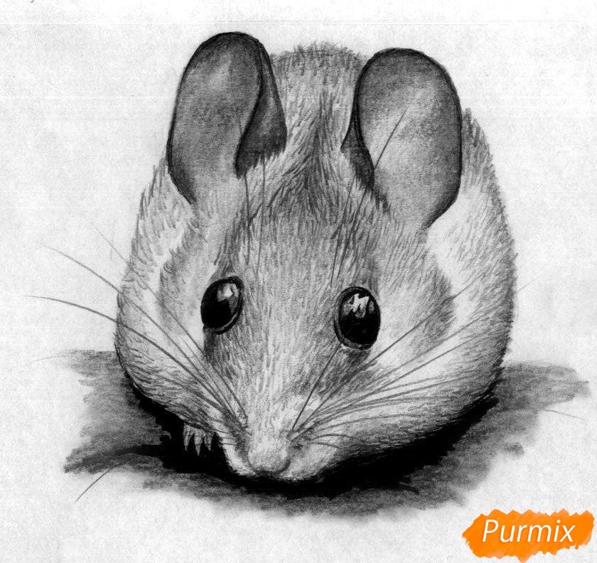 Картинки мышей нарисованных карандашом