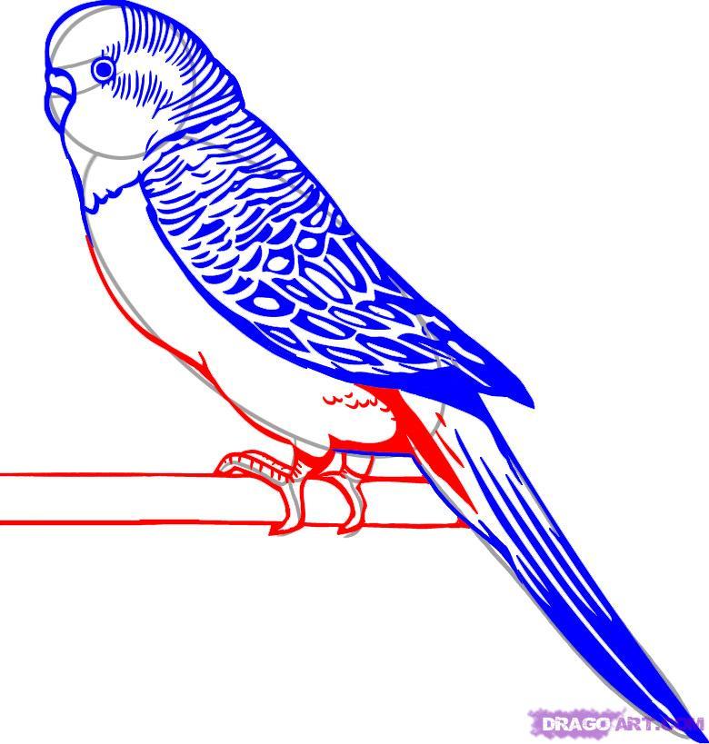 Смотреть картинки попугаев нарисованных карандашом