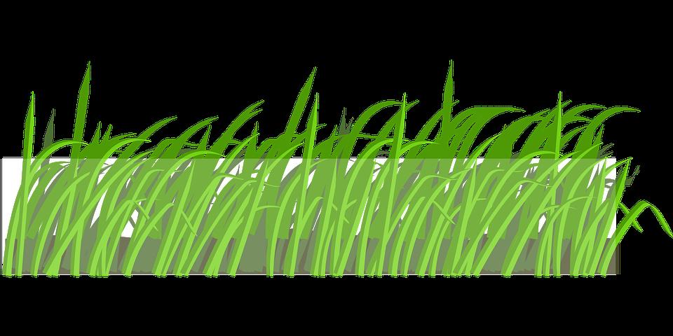 Травка картинка для детей нарисованные