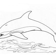 Рисунки карандашом для детей дельфины (34 фото)