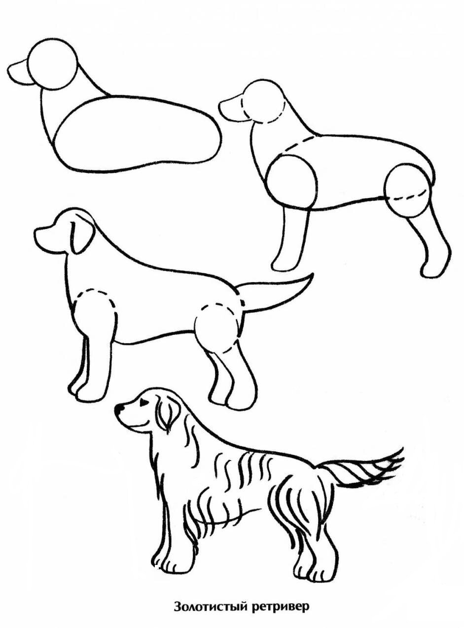 Рисунки собаки карандашом для детей поэтапно (58 фото ...