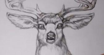 Рисунки карандашом голова оленя (51 фото)
