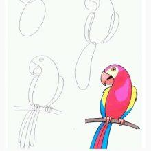 Рисунки карандашом попугай ара (24 фото)