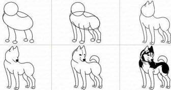 Рисунки собаки карандашом для детей поэтапно (58 фото)