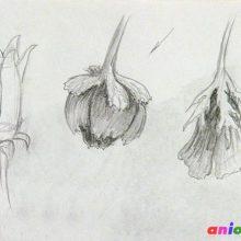 Рисунки простым карандашом цветы цветущие в августе (34 фото)