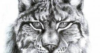 Рисунки карандашом морда рыси (18 фото)