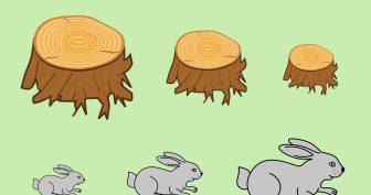 Рисунки зайца карандашом для детей (39 фото)