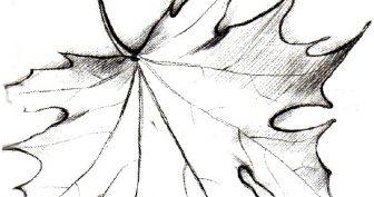 Рисунки карандашом кленовый лист (24 фото)