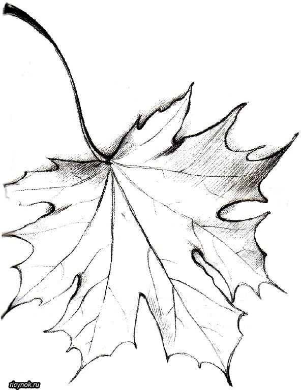 Картинки как нарисовать осенний лист карандашом