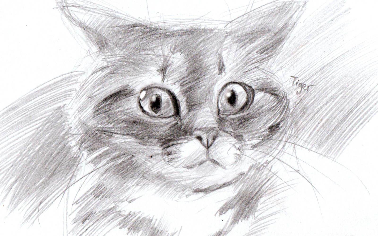Картинки кошки нарисованные карандашом