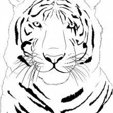 Рисунки карандашом морда тигра (59 фото)