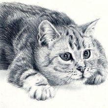 Рисунки карандашом черно-белый кот (26 фото)
