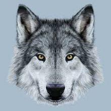 Рисунки карандашом морда волка (34 фото)