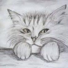 Рисунки карандашом пушистый кот (35 фото)