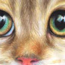 Рисунки карандашом глаза кошки (25 фото)