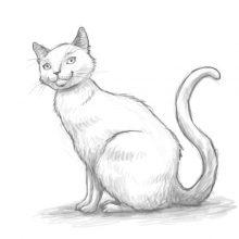 Смешные рисунки котов карандашом (34 фото)