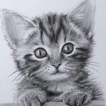 Рисунки карандашом мордочка кошки (30 фото)