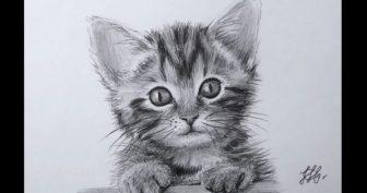 Рисунки карандашом мордочка кошки (60 фото)