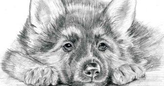Рисунки карандашом милые зверюшки (32 фото)