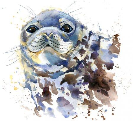 Рисунки карандашом морские котики (28 фото) 🔥 Прикольные ...