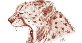 Милые рисунки гепарда для срисовки (22 фото)