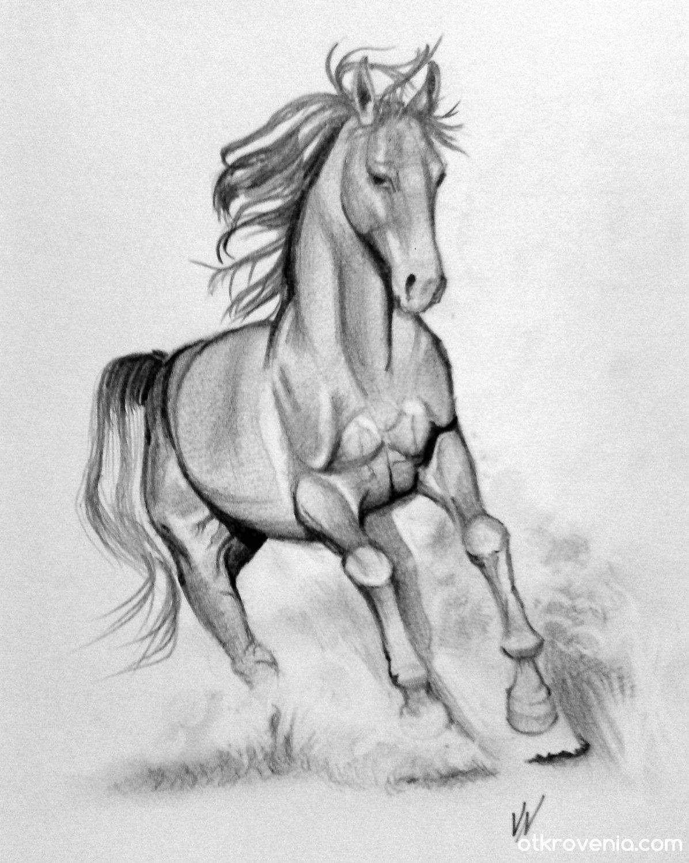 Картинки конь для срисовки
