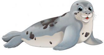 Рисунки карандашом морские котики (28 фото)