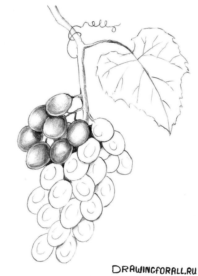 виноградный лист где купить