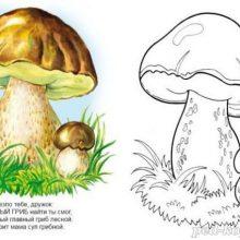 Рисунки карандашом белый гриб (20 фото)